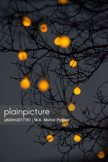 Tree branches with fairy lights at twilight - p620m2277787 by M.A. Muñoz Pellicer