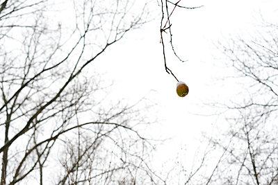 Der letzte Apfel - p118m859639 von Daniel Sadrowski