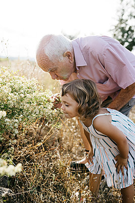 Grandfather with granddaughter smelling flowers in field - p300m2206775 by Josep Rovirosa