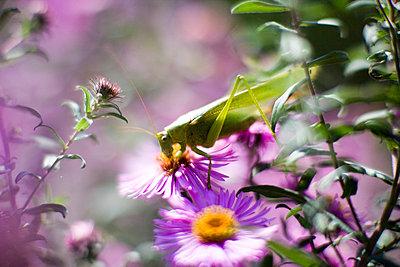 Grasshopper - p5870114 by Spitta + Hellwig