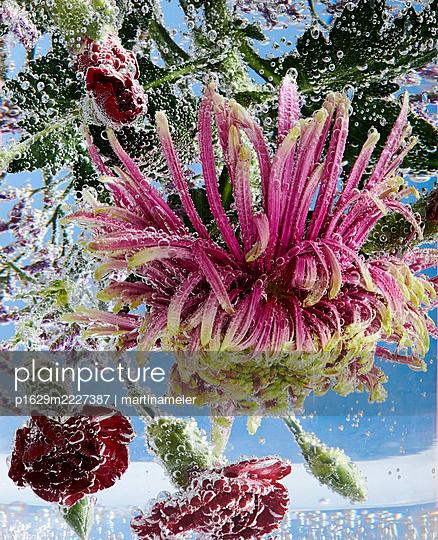 Frische Blumen - p1629m2227387 von martinameier