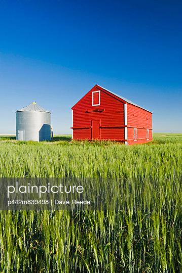 Metal Grain Bin And Wooden Grain Bin In Wheat Field; Sceptre Saskatchewan Canada - p442m839498 by Dave Reede