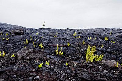 Hawaii landscape - p9070056 by Anna Fritsch