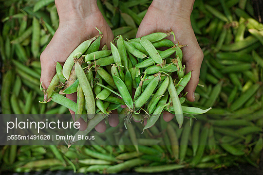 Hands holding peas in pods - p555m1491628 by Dmitriy Bilous
