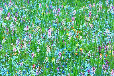 Flower garden - p307m1012042f by Mamoru Muto