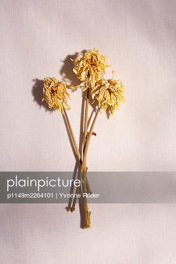 Withered flowers - p1149m2264101 by Yvonne Röder