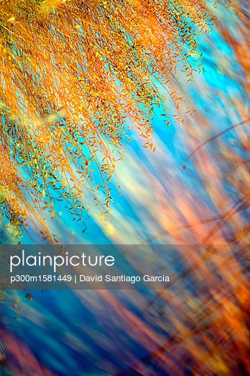 Spain, Wicker cultivation in Canamares in autumn, blurred - p300m1581449 von David Santiago Garcia