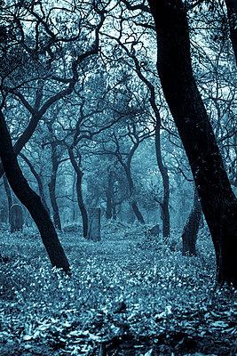 Cemetery of Confucius - p1170m1444291 by Bjanka Kadic