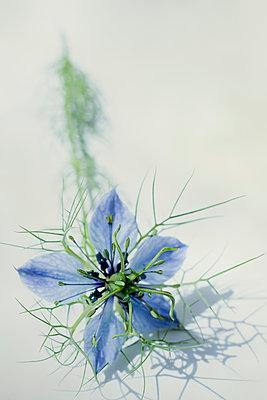 Wild flower - p1228m1584134 by Benjamin Harte