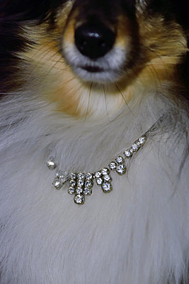 Dog with necklace - p1235m1539616 by Karoliina Norontaus