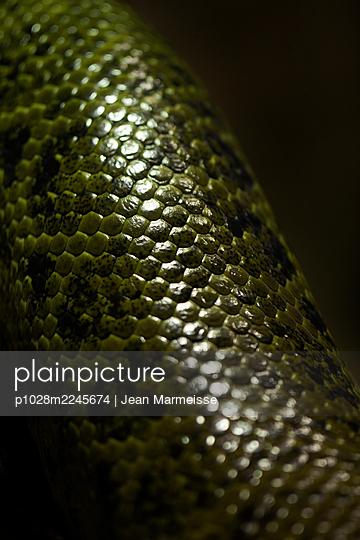 Snake scales - p1028m2245674 by Jean Marmeisse