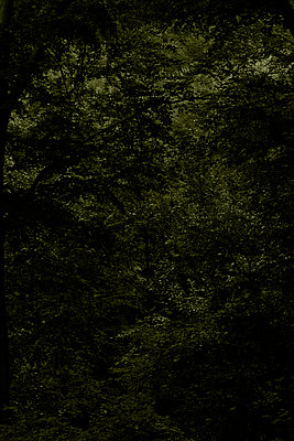 Wald - p1294m1159598 von Sabine Bungert