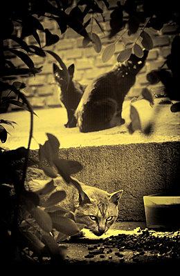 Katzen - p3580267 von Frank Muckenheim