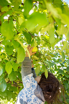 Apple Picking - p535m947666 by Michelle Gibson