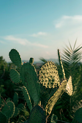 Cactus - p947m2119424 by Cristopher Civitillo