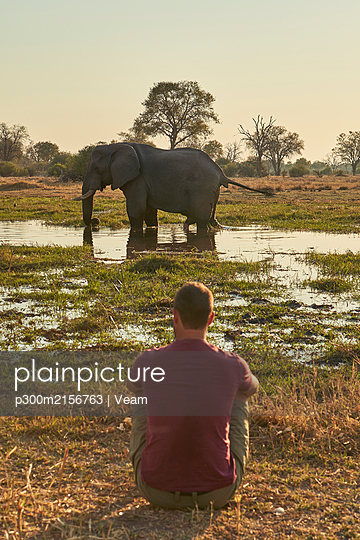 Man watching an elephant standing in the water, Khwai, Botswana - p300m2156763 by Veam