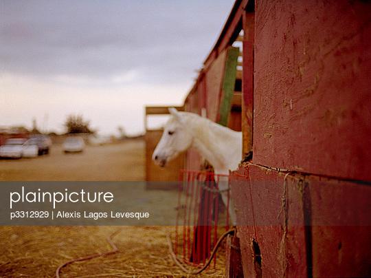 p3312929 von Alexis Lagos Levesque