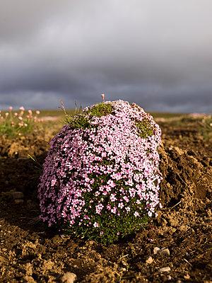 Stein und Blüten - p362m1541410 von André Wagner