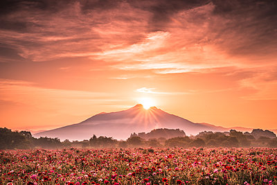 Mt. Tsukuba and poppy field - p514m1483951 by TAKASHI KOMATSUBARA