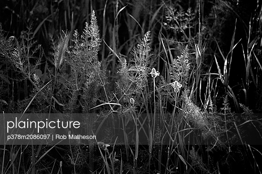 Grasses in shaft of sunlight,Cap,Corb - p378m2086097 by Rob Matheson