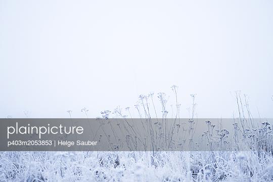 Winterwiese - p403m2053853 von Helge Sauber