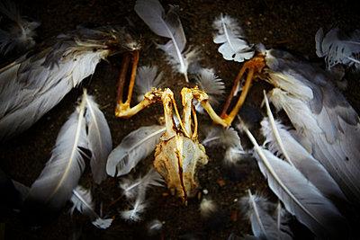 Vogelskelett - p4150789 von Tanja Luther