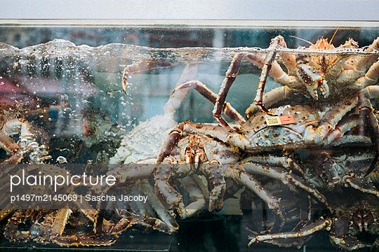 Krebse im Aquarium auf Fischmarkt in Bergen, Norwegen - p1497m2145069 von Sascha Jacoby