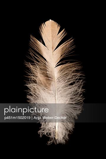 p451m1502019 by Anja Weber-Decker