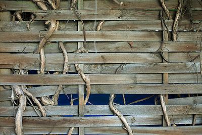 Verwurzelt - p2120128 von Edith M. Balk