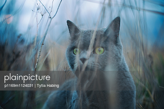 Hunting Cat - p1169m1124031 by Tytia Habing