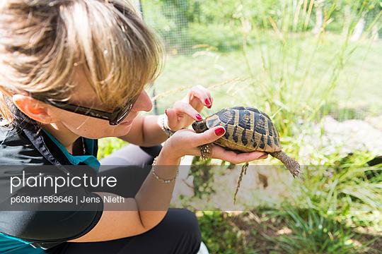 Schildkröte - p608m1589646 von Jens Nieth