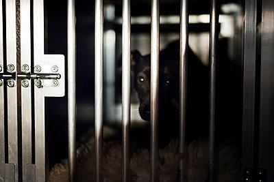 Animal shelter - p1076m987602 by TOBSN