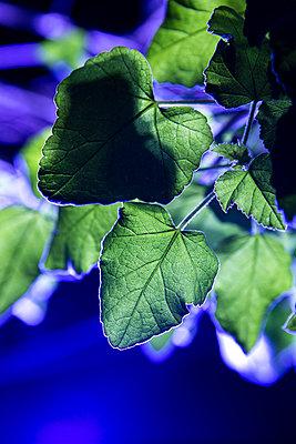 Pflanze in unheimlichem Licht - p1057m1203299 von Stephen Shepherd
