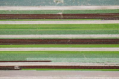 Feld von oben - p1357m1207552 von Amadeus Waldner