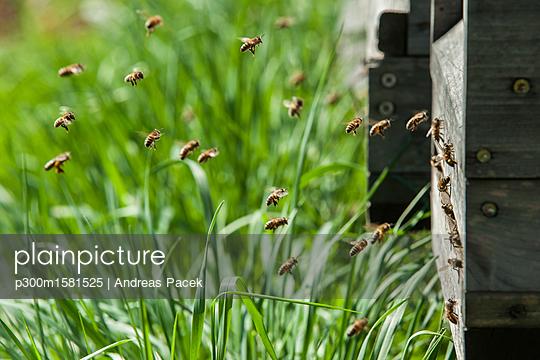 Germany, Beehives on harm - p300m1581525 von Andreas Pacek