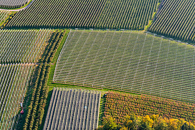 Germany, Aerial view of orchards near Ailingen - p300m2083001 by Holger Spiering