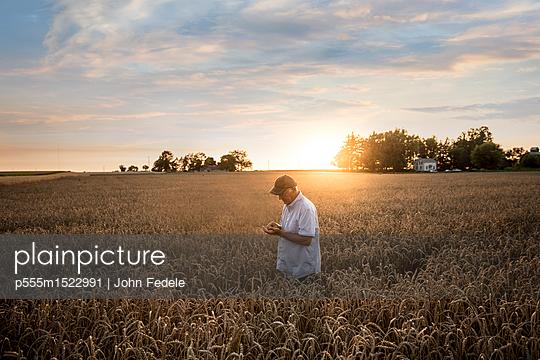 Caucasian man examining wheat in field - p555m1522991 by John Fedele