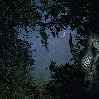 The Sleepless Night - p1633m2209046 by Bernd Webler