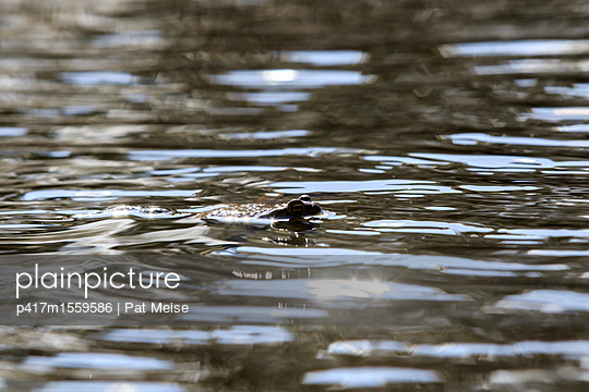 Kröte - p417m1559586 von Pat Meise