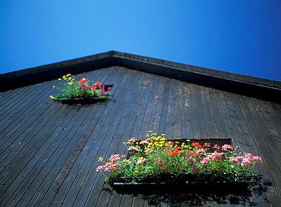 Wooden facade - p1880009 by Walter Pilsak