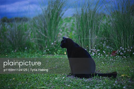 p1169m1124125 von Tytia Habing