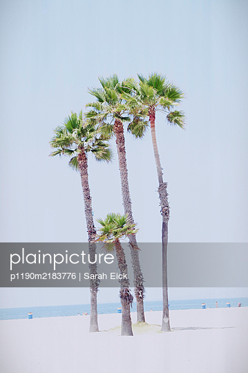 Palms on the beach, California, USA - p1190m2183776 by Sarah Eick