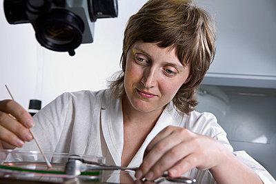 A research technician using a cotton swab on liquid in a Petri dish - p301m714651f by Vladimir Godnik
