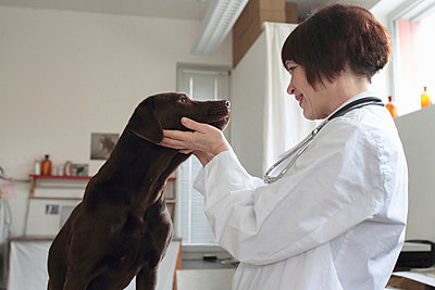 Female veterinarian examining dogs eyes in clinic - p429m895454f by Sigrid Gombert