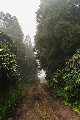 Forest road, Sao Miguel Island, Azores, Portugal - p300m2170007 by VITTA GALLERY