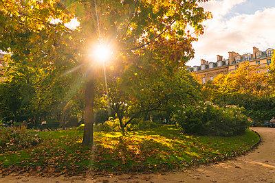 Sonne scheint durch Bäume - p1332m1502784 von Tamboly