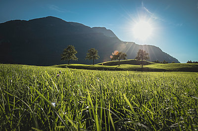Austria, Bad Ischl, Katrinberg and meadow against the sun - p300m1568421 von Spotcatch