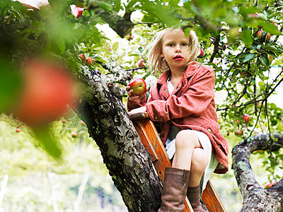 Girl on ladder eating apple, Varmdo, Uppland, Sweden - p312m897196 by Johner