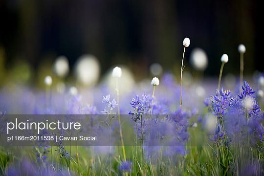 p1166m2011598 von Cavan Social