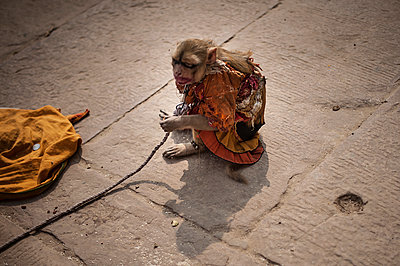 Monkey with leash - p1007m1144406 by Tilby Vattard